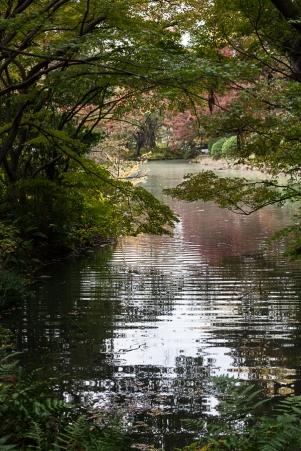 Kyoto Garden - pic 6