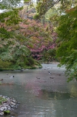 Kyoto Garden - pic 7