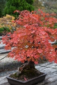 Kyoto Garden - pic 9