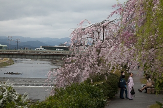 Enjoying the Sakura - pic 1