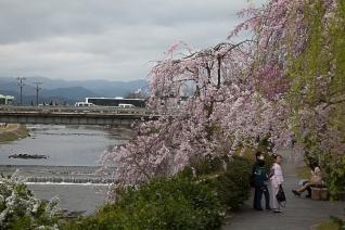 Enjoying the Sakura - pic 1