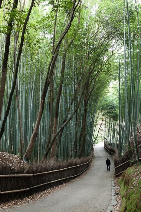 Arashiyama's bamboo path