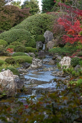 Taizo-in Japanese Pond Garden - pic 1