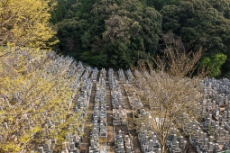 Cemetery - pic 2