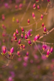 Ninnaji Gardens - pic 1