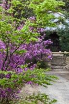 Ninnaji Gardens - pic 2