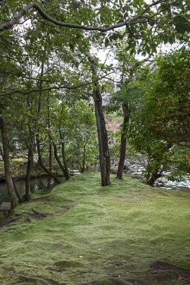 A Mossy Mound